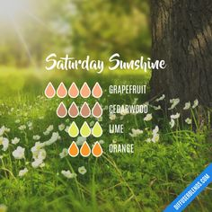 Saturday Sunshine - Essential Oil Diffuser Blend