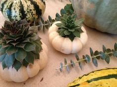 Plant Succulents in Tiny Pumpkins >> http://blog.diynetwork.com/maderemade/2013/10/02/plant-succulents-in-pumpkins-for-a-modern-fall-tablescape?soc=pinterest