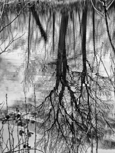 roseannadana: Back on my home turf posted a photo:  Tree Reflections in Cary Creek in blackandwhite