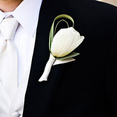 boutonniere with a Clear Water French tulip, variegated lily grass and eucalyptus foliage