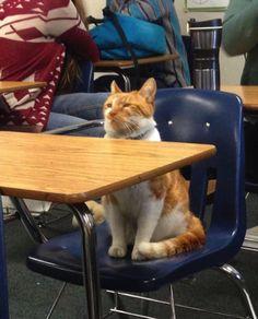 アメリカ・カルフォルニア州の高校で、ババちゃんという近所の飼い猫が学生として認められました。