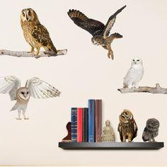 Owls Say Hoot | Animal & Nature