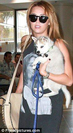 miley cyrus and dog