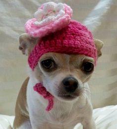 Sombrero de perro ganchillo, lana rosa con flor blanca y rosa, en pequeño o xsmall