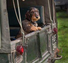 Perfect companion for adventures   #LandRover #Car #autoparts #autorepair #fixingcar