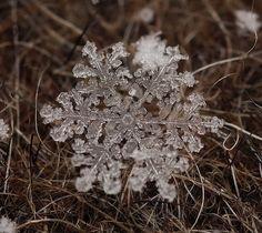 雪の結晶 画像12