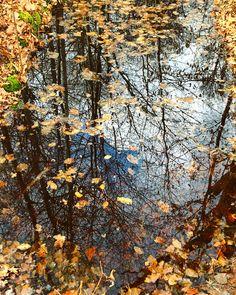 Reflection 🍃🍂