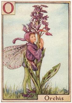 FLOWER FAIRIES/BOTANICALS: Orchis; This is an original vintage Cicely Mary Barker Flower fairies colour print. It is not a modern reproduction, c1934; approximate size 11.0 x 7.5cm, 4.25 x 3 inches