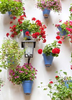How to use pots to cover walls with flowers - take inspiration from Spanish courtyard gardens