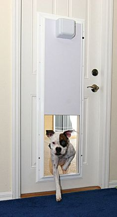 Electronic Pet Door with One Touch Programming Wireless for Easy Access The best kind use a unique microchip on your pet's collar. It's like E-ZPass access for authorized four-footed family members but a locked door for everyone else. Pet Door, Door Wall, Home Tech, Dog Rooms, Protecting Your Home, Pet Collars, Dog Houses, Diy Home, Dog Accessories