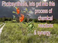 WK 12 - photosynthesis