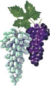 Clafoutis au raisin/Clafoutis z winogron - TRAVAUX i PRACE RECZNE Fruit, Raisin, Html, Plants, Country Man, Stitching, Plant, Planets