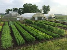 vegetable garden How To Make A Living Off A Half-Acre Farm - Off The Grid News The Farm, Small Farm, Vegetable Garden Planner, Vegetable Farming, Home Vegetable Garden Design, Farm Layout, Design Jardin, Market Garden, Farm Gardens