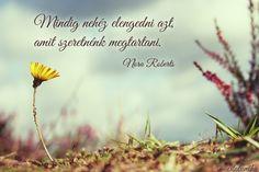 Nora Roberts idézete az elengedésről.