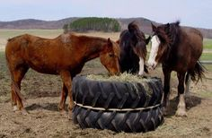 Homemade horse feeder. If you got big enough tires, you might even be able to put a round bale in there!