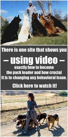 Detailed Dog training about How To Become The Pack Leader | Dog Training | Cute puppy | Dog Whisper | Dog memes | Dog Tips | #DogTricks