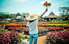 Taman Begonia #Taman Begonia #Bandung - by blogspot