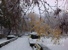 First snow day by Dan Marinescu First Snow, Dan, Autumn, Wall Art, Winter, Nature, Outdoor, Winter Time, Outdoors