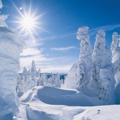 """snow ghost"" trees in the high country of Montana"