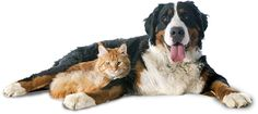 Doggie Daycare & Motel | Cat Boarding | All Pet boarding and Daycare