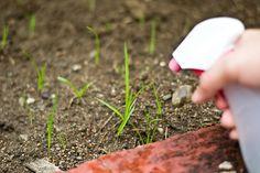 Garden hacks - DIY garden hacks - uses for vinegar. Use vinegar to kill weeds and unwanted grass aro Kill Weeds With Vinegar, Killing Weeds, Weed Killer Homemade, Comment Planter, Vinegar Uses, Garden Weeds, Organic Gardening Tips, Gardening Hacks, Gardening For Beginners
