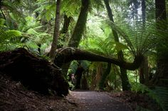 Tarra Bulgu National Park, East Gippsland, Victoria. Lex i would love to go here. Is it far?