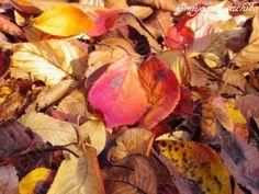 leafs sakura japan