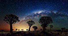 Bing Deutschland | ... Köcherbaumwald, Namibia (© Florian Breuer/NASA)(Bing Deutschland
