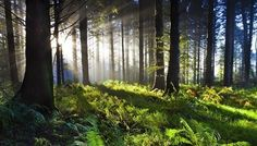 21 reasons why forests are important | MNN - Mother Nature Network