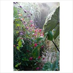Early morning in the Exotic Garden at Great Dixter, Northiam, with dew on the plants and mist in the air