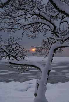 Snow Sunset Nothing Is Really So Beautiful As The Nature During Proper Winter