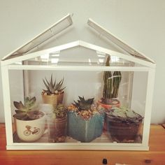 adorable - succulents in mini greenhouse from ikea