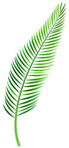 Palm Leaf PNG Clip Art