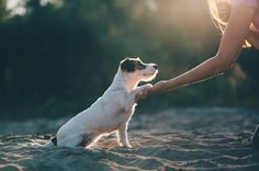Jack Russell, by Anna Tyurina.