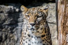 New free stock photo of animal eyes blur