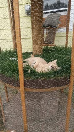 Outside Cat Enclosure, Cat Mansion, Cat House Diy, Wire Spool, Cat Cages, Cat Run, Cat Playground, Cat Garden, Cat Condo