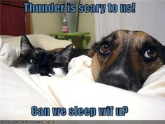 HELPING YOUR DOG'S FEAR OF THUNDERSTORMS