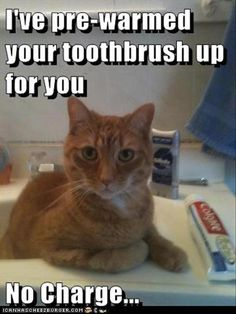 Funny Animal Pictures Of The Day - 25 Pics
