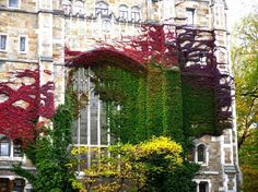 multicolored fall foliage. Virginia creeper maybe? This might be at Lehigh University.