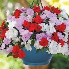 """Résultat de recherche d'images pour """"suspension fleurs exterieur"""""""