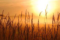 Misty autumn field.