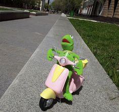 Funny Kermit Memes, Cute Memes, Sapo Kermit, Frog Meme, Cute Frogs, Kermit The Frog, Quality Memes, Mood Pics, Meme Faces