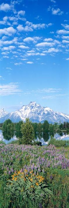 Grand Teton National Park WY http://www.walls360.com/national-parks-wall-graphics-s/2071.htm