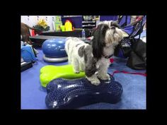 Instability training is fun on the K9FITBone™. Develop strength, endurance, body awareness, balance and flexibility, with the K9FITBone. You can change the inflation level to alter the dynamic balance challenge. The pump is included, and you also get exercises as well. - www.fitpawsusa.com  #fitpaws #fitpawsusa #caninegym