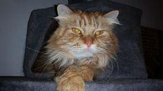 Hitch  Katze | Pawshake Esssen