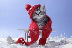 gato con frio - Buscar con Google