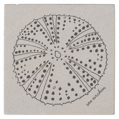 Shop Sea Urchin Drawing Tropical Stone Coaster created by millhill. Sea Creatures Drawing, Sea Urchins, Stone Coasters, Ocean Life, Drink Coasters, Tropical Fish, Under The Sea, Line Drawing, Tatoos