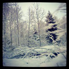 Pois alta risut ja männynkävyt! #sweden ist #frozen #garden of #eden ❤ #sverige