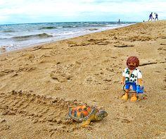 A sea turtle Caretta Caretta!
