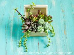 Succulent Arrangement in a Wooden Box - Thriller, Filler, Spiller - Succulents and Sunshine